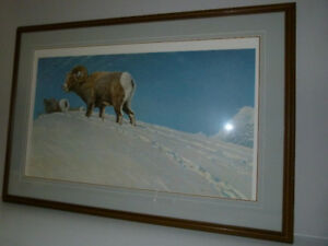 Robert Bateman - Last Look - Bighorn Sheep - framed