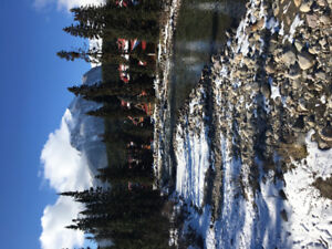 Looking for a room apartment/shared house in Banff !