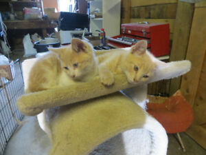 two male kittens ready for a new home