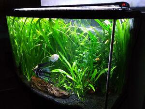 Beautiful Aquarium - Ready to go to a new home