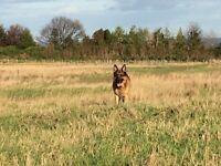 Pets at Heart Professional Dog Walker / Pet Sitter Edinburgh East