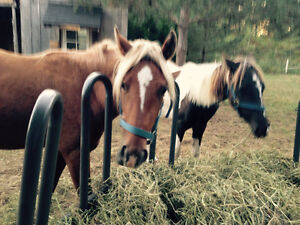 4year old gelded and 3year old Peterborough Peterborough Area image 3