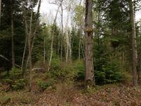 Terre à bois de 18 arpents à St-Cuthbert