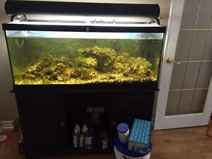 75 gallon salt water fish tank with black stand