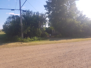 House & 3 lots, large secluded yard, in Aneroid on HWY 13