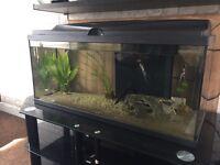 71l fish tank