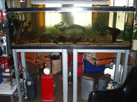 Aquarium 133 gallons $600 - ** Negotiable ** REDUCED!!!
