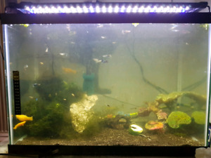 20 gallons fish tank
