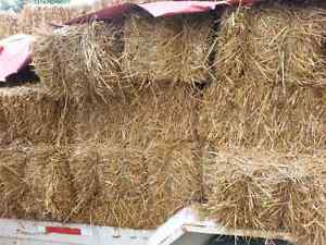 Small square Straw bales  and sheep Kitchener / Waterloo Kitchener Area image 1
