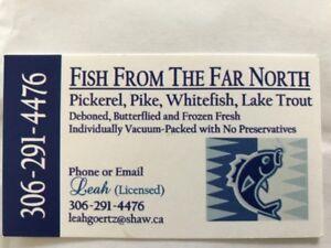 FISH N SK  PICKEREL  N PIKE  LAKE TROUT FOR SALE IN SASKATOON
