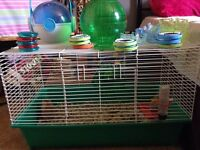 Gerbils and Cage accsesories