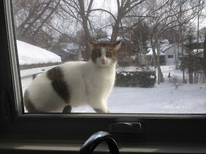 Male cat needs good home Peterborough Peterborough Area image 2