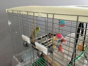 Peroquin a vendre avec cage