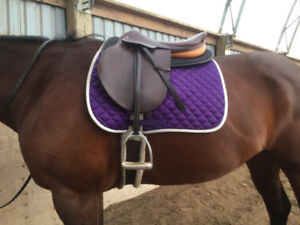 Crosby Prix de Nation saddle