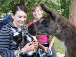 Go on a Farm Adventure with Horse ride and petting farm