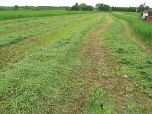2017 First Cut Alfalfa&Timothy mix in small square bales