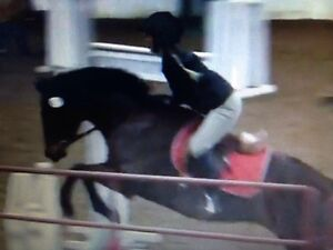 Certified Horse Riding Lessons