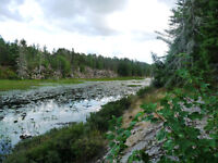 30 Acres With A Creek! Year Round Road! Build Or Getaway!