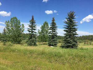 Pigeon lake Poplar Bay treed acreage for sale