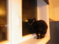 chatte noire a donner