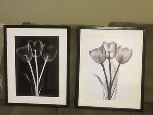 IKEA RIBBA Frames with Tulip Prints