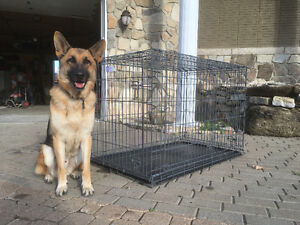 """X - Large dog cage brand new (48"""") / Cage à chien X - Large neuf"""