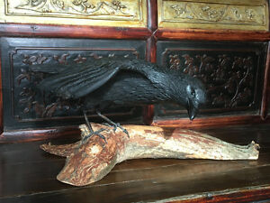 HAND CARVED AND MOUNTED - RAVEN