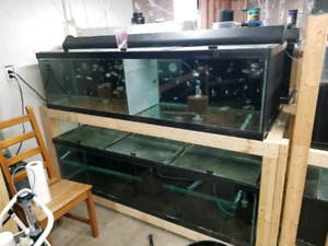 150 gal long aquariums