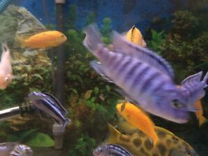 Cichlids first babys
