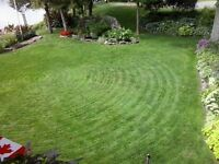 lawn care, trees cut,