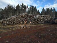 Softwood firewood for 2015 season