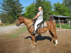 Trail horses for sale!