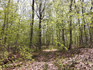 48+Acres w/Drive, 2km from Beach, Abutts Crown Land, NOW $129k!!