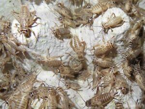 Crickets $9.50/1000---- Mealworms $27/5000-- Superworms $18/1000