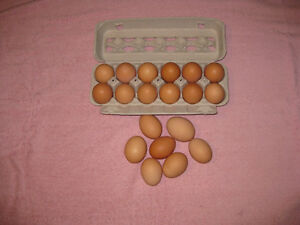 Chickens Eggs for Sale