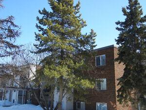 2 Bedroom Condo, Southwest, Close to Southgate Mall and LRT Edmonton Edmonton Area image 1