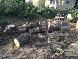 Tree REMOVAL-TREE Triming/Pruning>FALL SPECIAL...... Kitchener / Waterloo Kitchener Area image 7