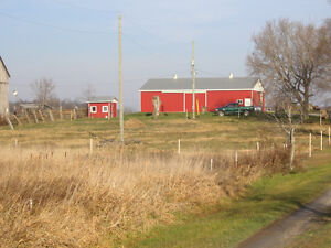 Farm for Sale by Auction Kawartha Lakes Peterborough Area image 3