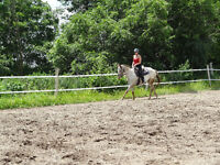 Extremely fun young mare for partboard-super brave