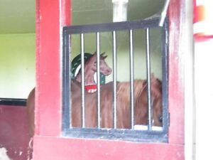 portes de stall pour chevaux