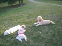 Pension familiale pour chiens Molly