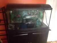 Fish tank and accessories plus stand