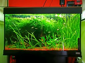 Fluval fish tank full setup