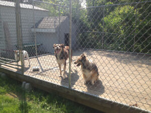 12x12 ft Galvanized Steel Dog Kennel with dog house.