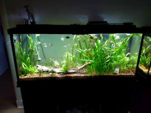 Aquarium 55 g