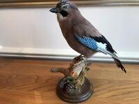 Taxidermy Jay Bird