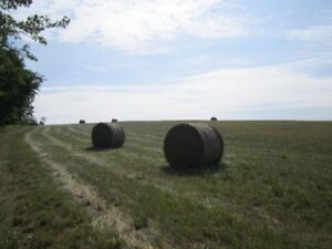 first cut 2018 hay