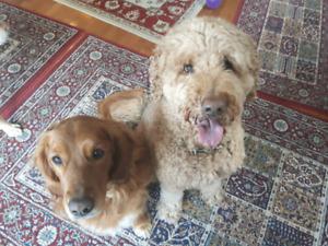 Riverside South - In Home Dog Boarding
