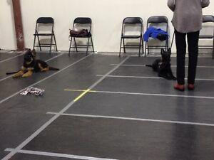 Puppy class starting soon, still a few spots left!
