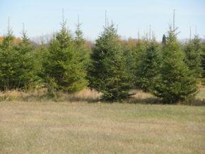 Huge Investment Opportunity ! Must Sell 2019....Tree Farm